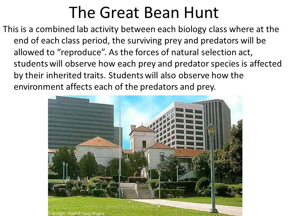 The Great Bean Hunt