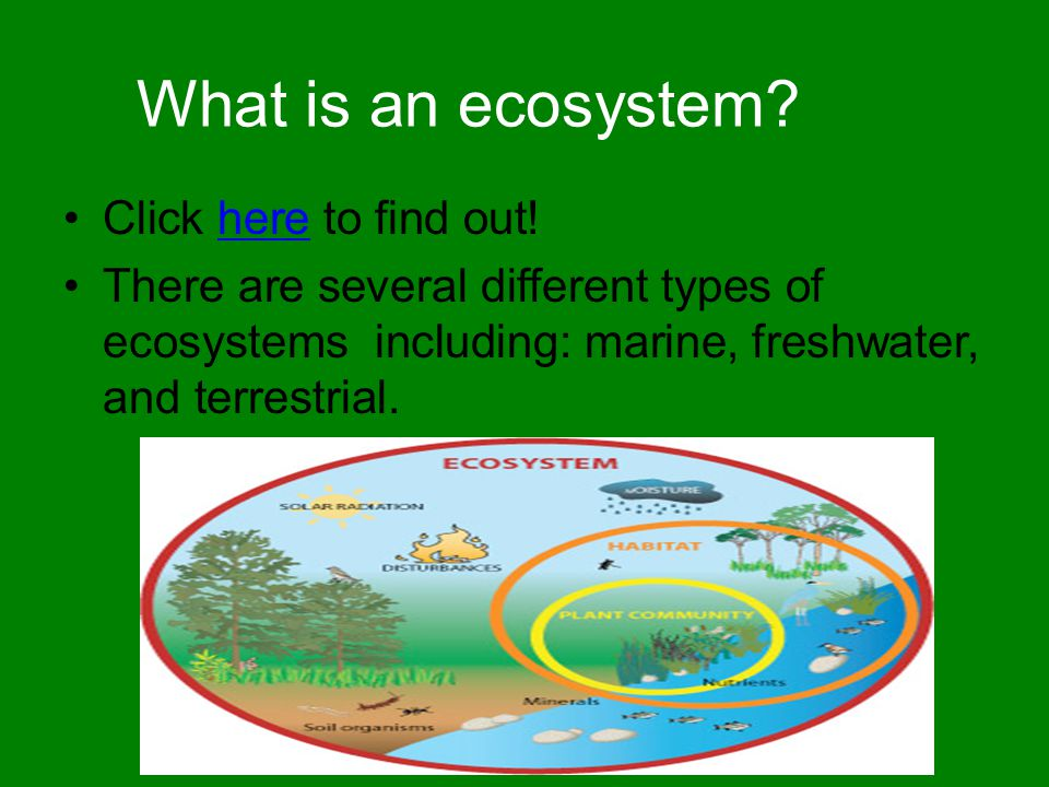 What is an ecosystem Click here to find out!