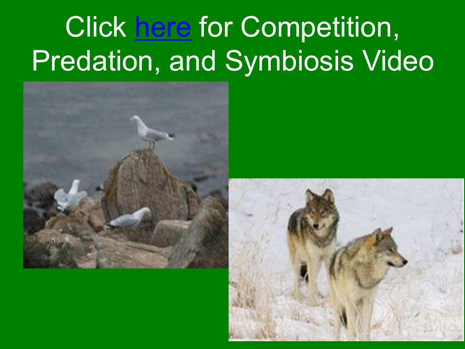 Click here for Competition, Predation, and Symbiosis Video