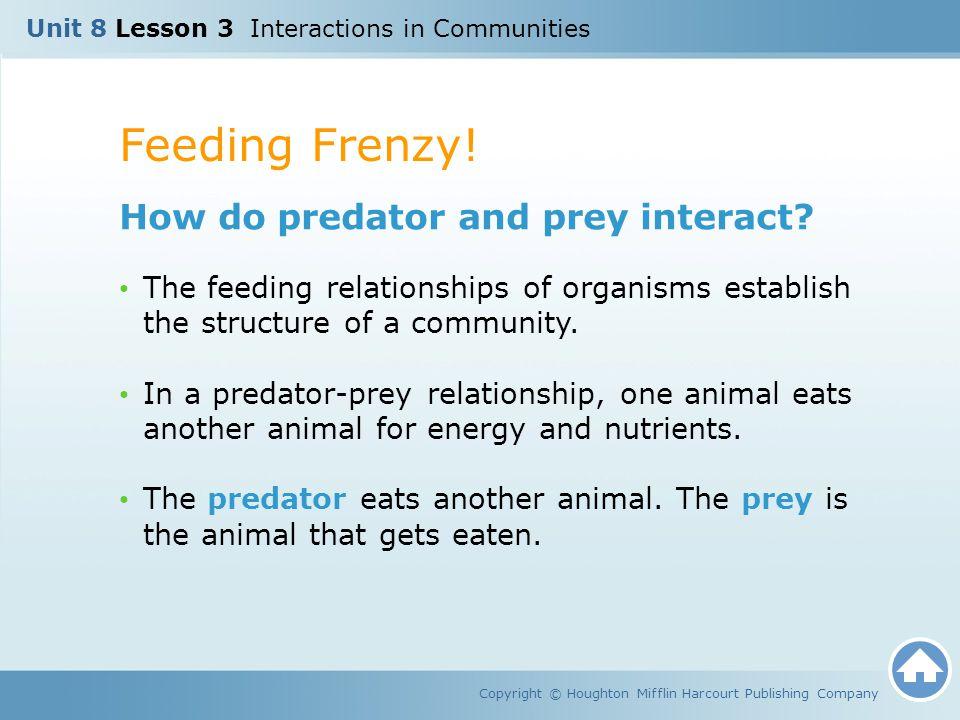 Feeding Frenzy! How do predator and prey interact