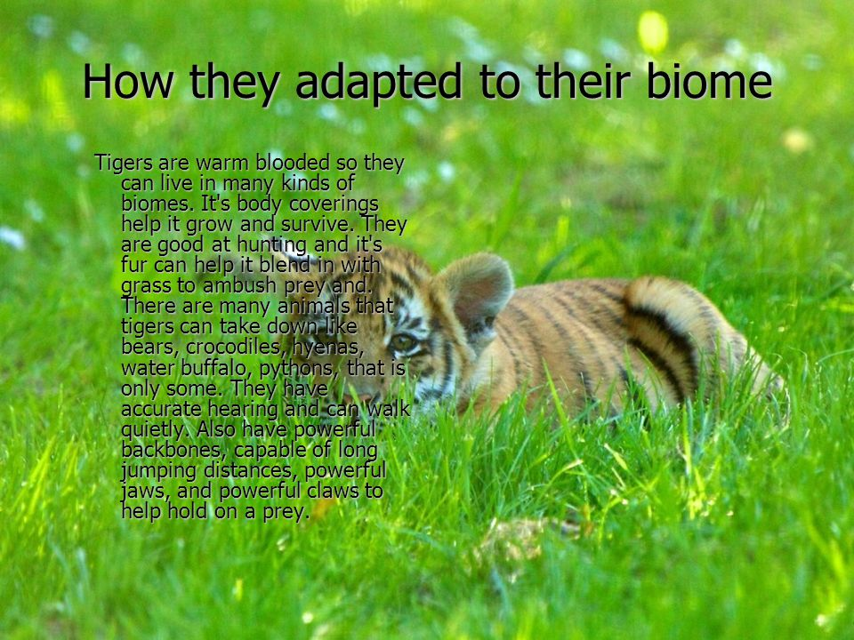 How they adapted to their biome