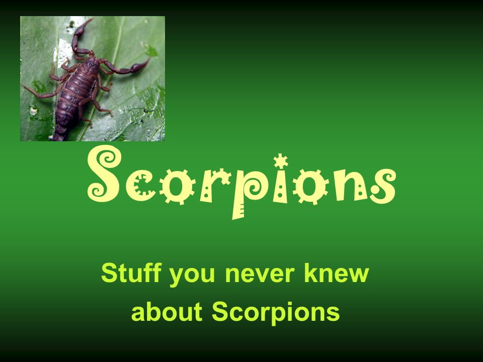 Stuff you never knew about Scorpions