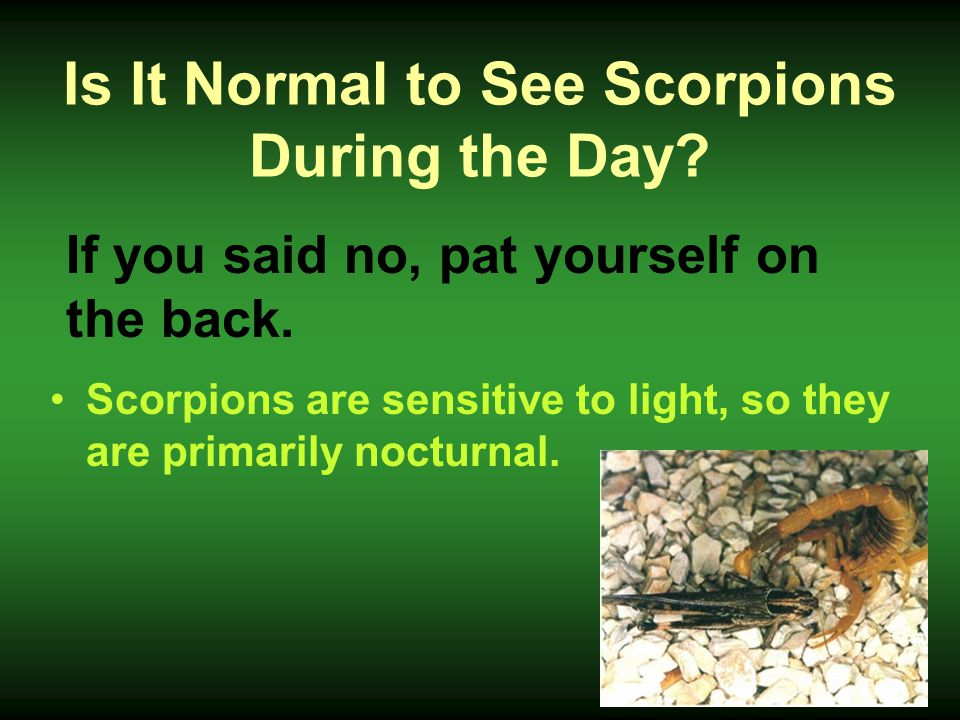 Is It Normal to See Scorpions During the Day