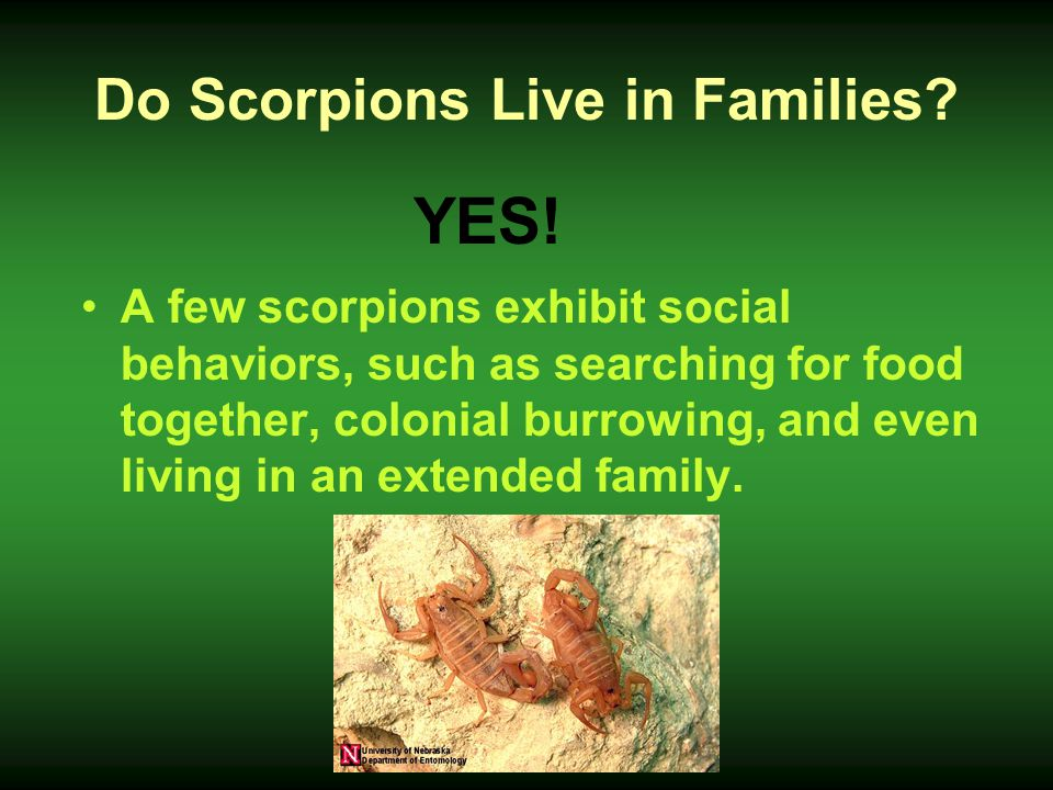 Do Scorpions Live in Families