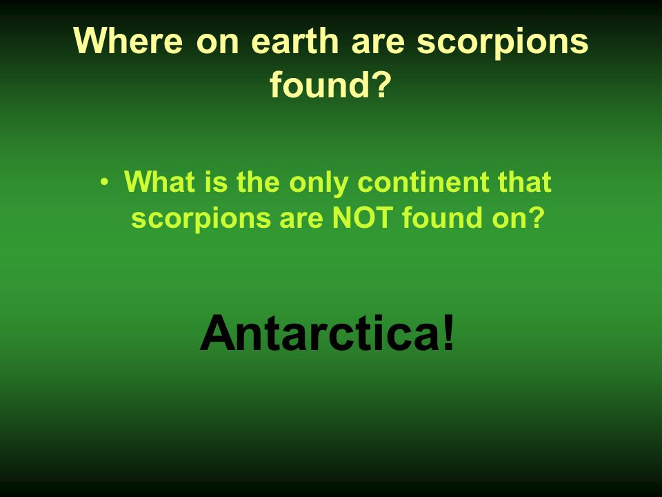 Where on earth are scorpions found