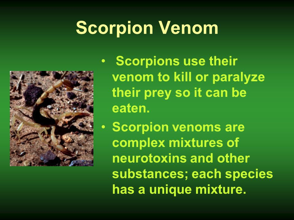 Scorpion Venom Scorpions use their venom to kill or paralyze their prey so it can be eaten.