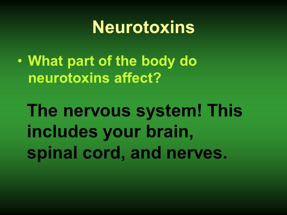 The nervous system! This includes your brain, spinal cord, and nerves.