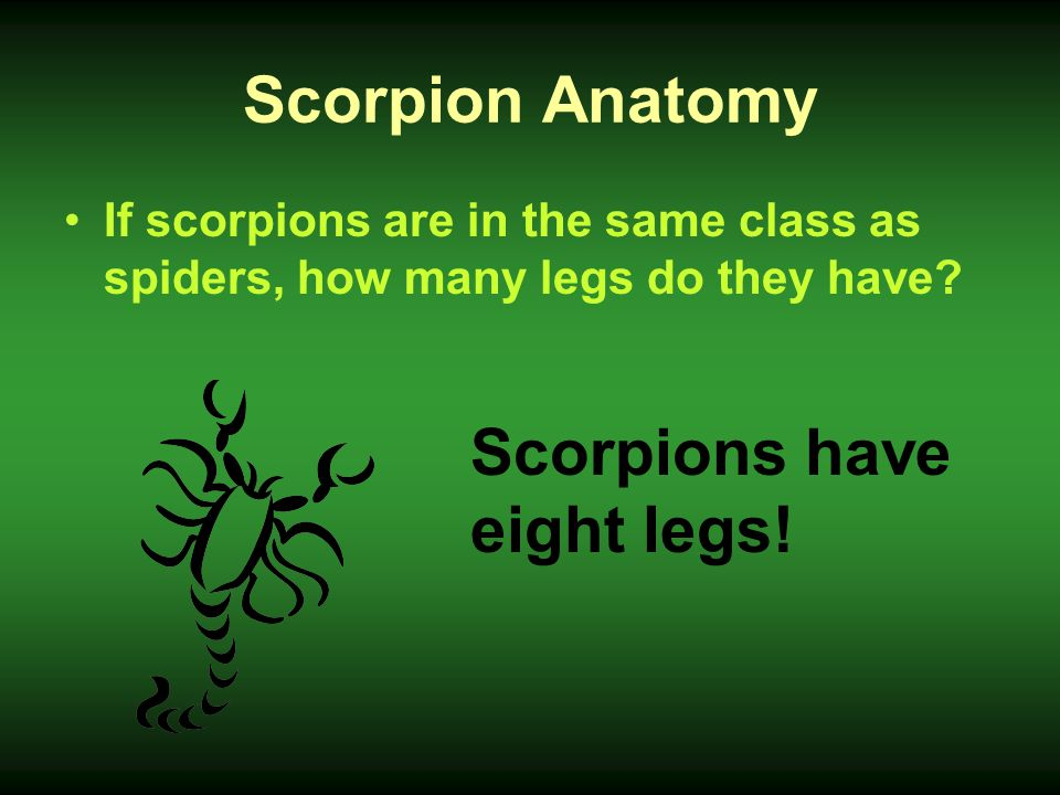 Scorpions have eight legs!