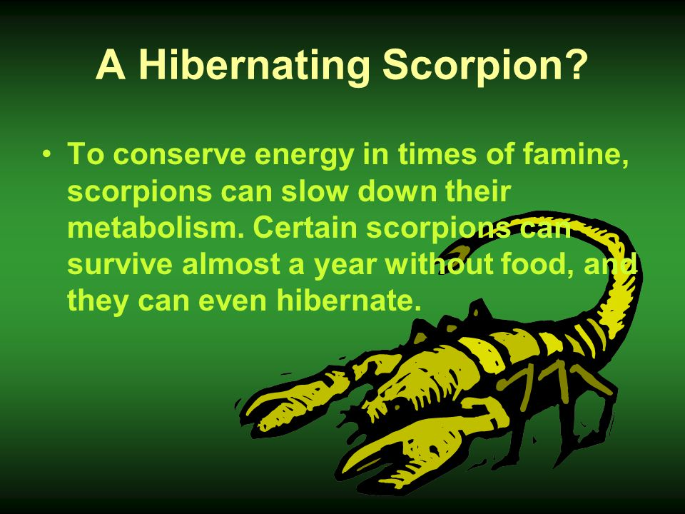 A Hibernating Scorpion