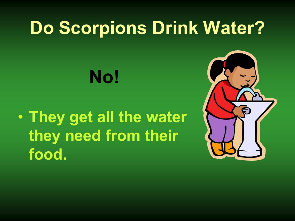 Do Scorpions Drink Water