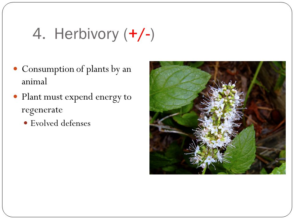 4. Herbivory (+/-) Consumption of plants by an animal