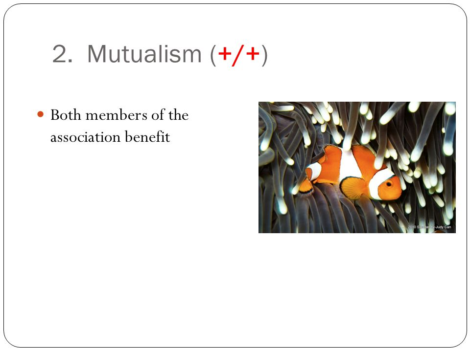 2. Mutualism (+/+) Both members of the association benefit