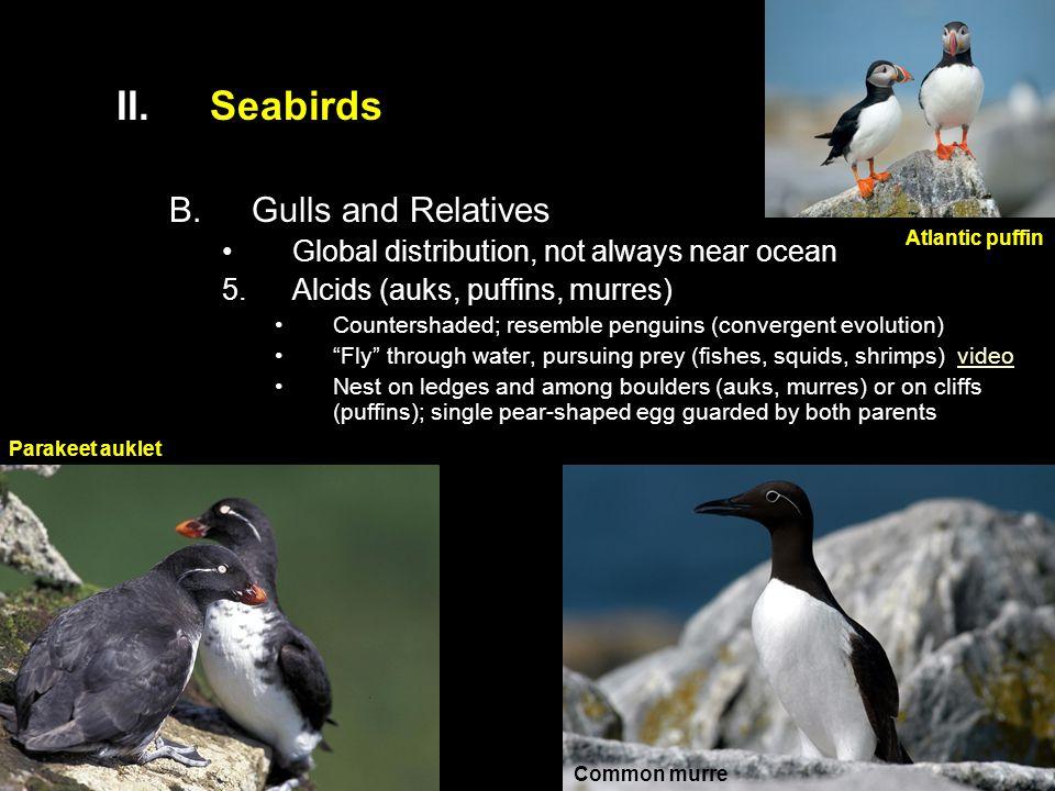 Seabirds Gulls and Relatives