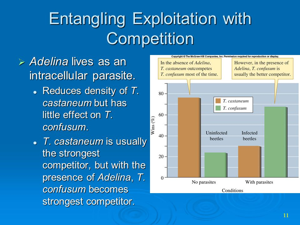 Entangling Exploitation with Competition