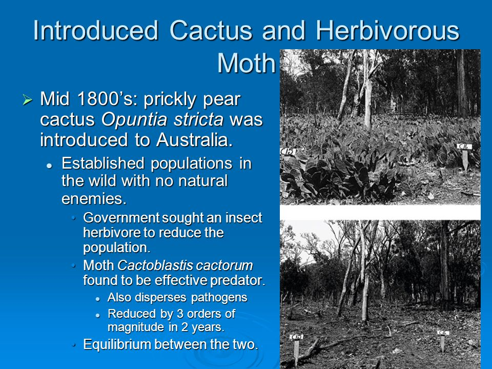 Introduced Cactus and Herbivorous Moth