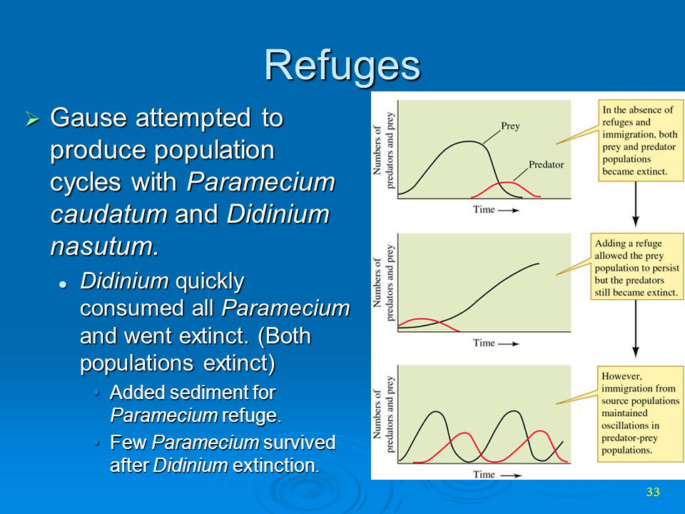 Refuges Gause attempted to produce population cycles with Paramecium caudatum and Didinium nasutum.
