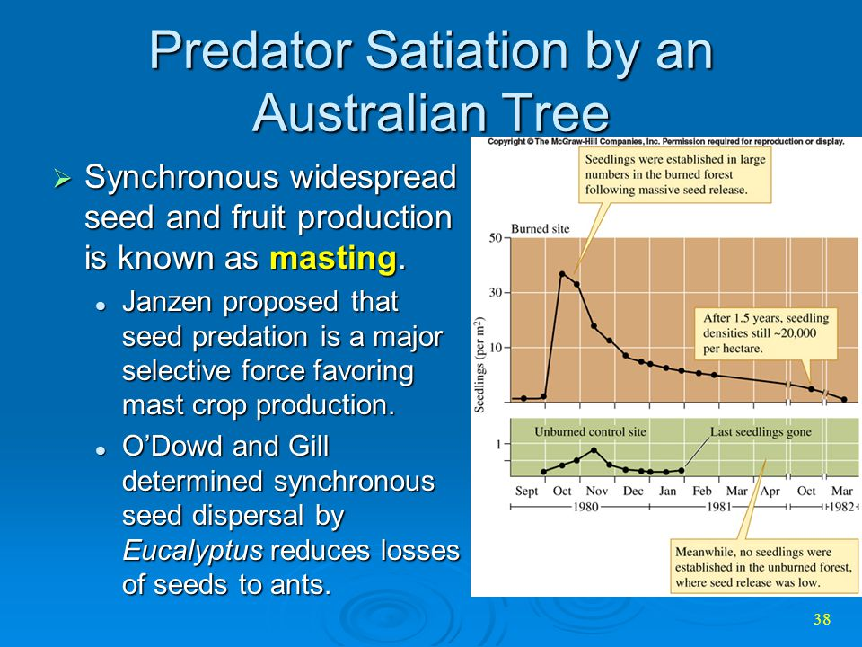 Predator Satiation by an Australian Tree