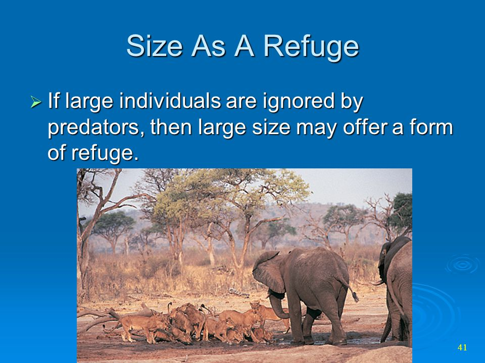 Size As A Refuge If large individuals are ignored by predators, then large size may offer a form of refuge.
