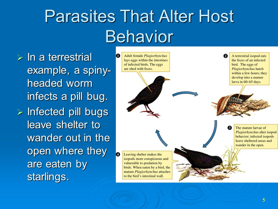 Parasites That Alter Host Behavior