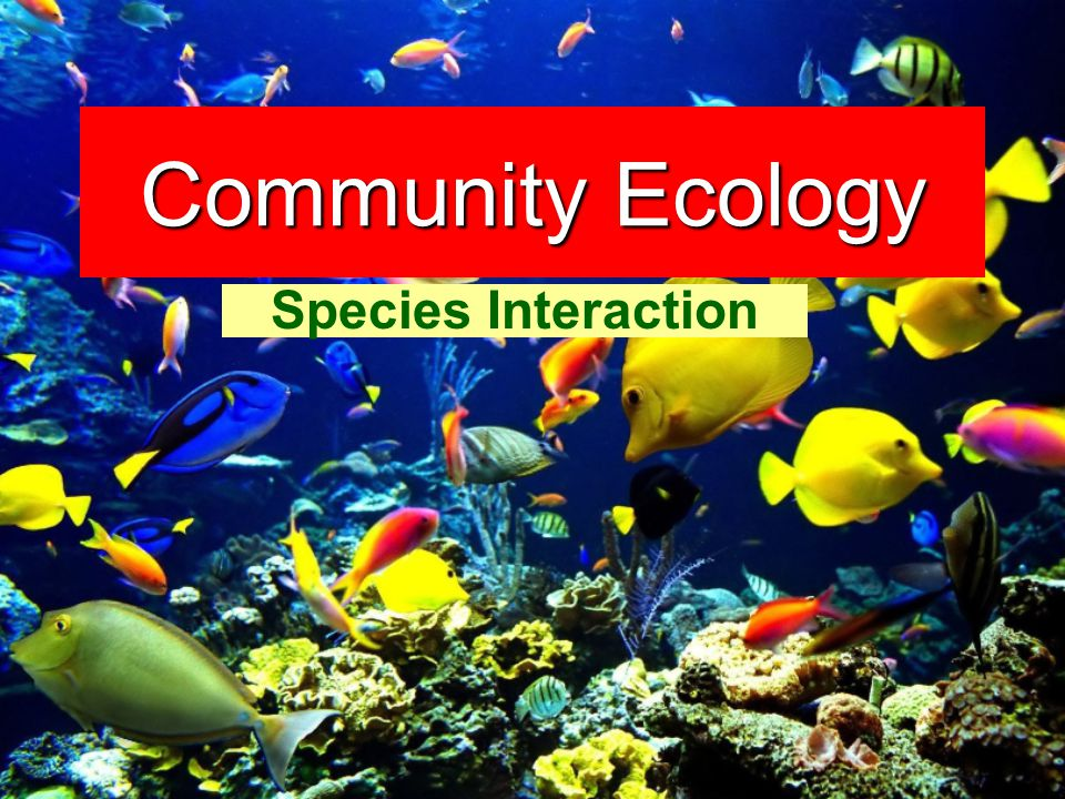 Community Ecology Species Interaction
