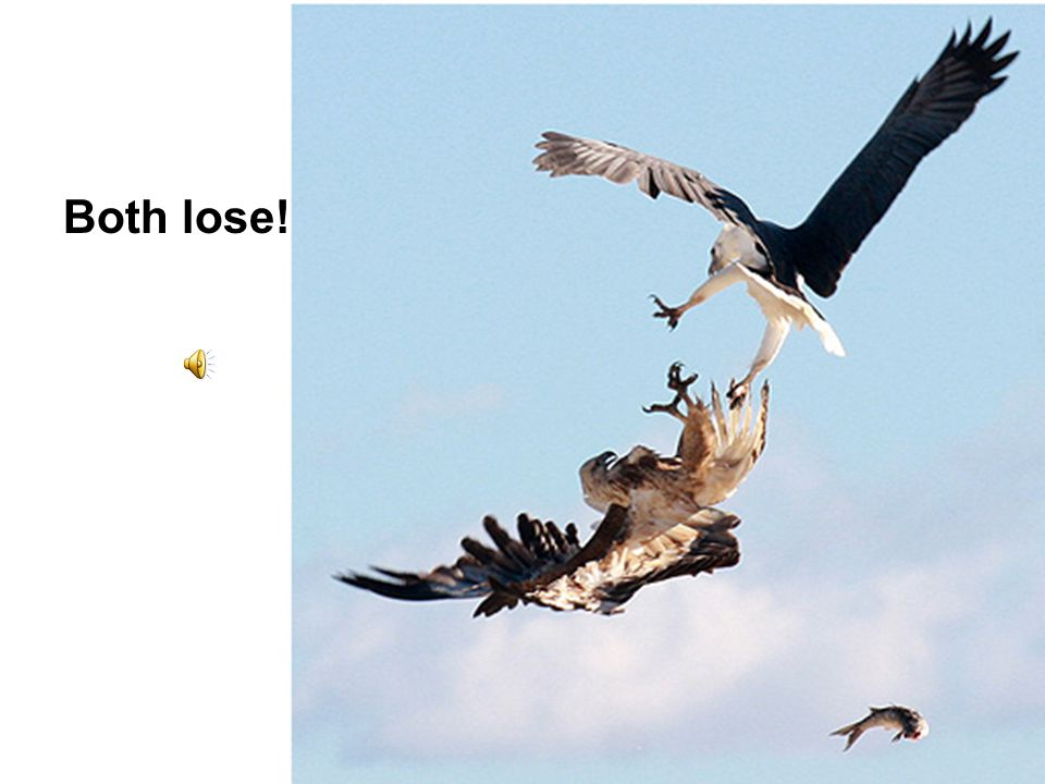 Both lose!