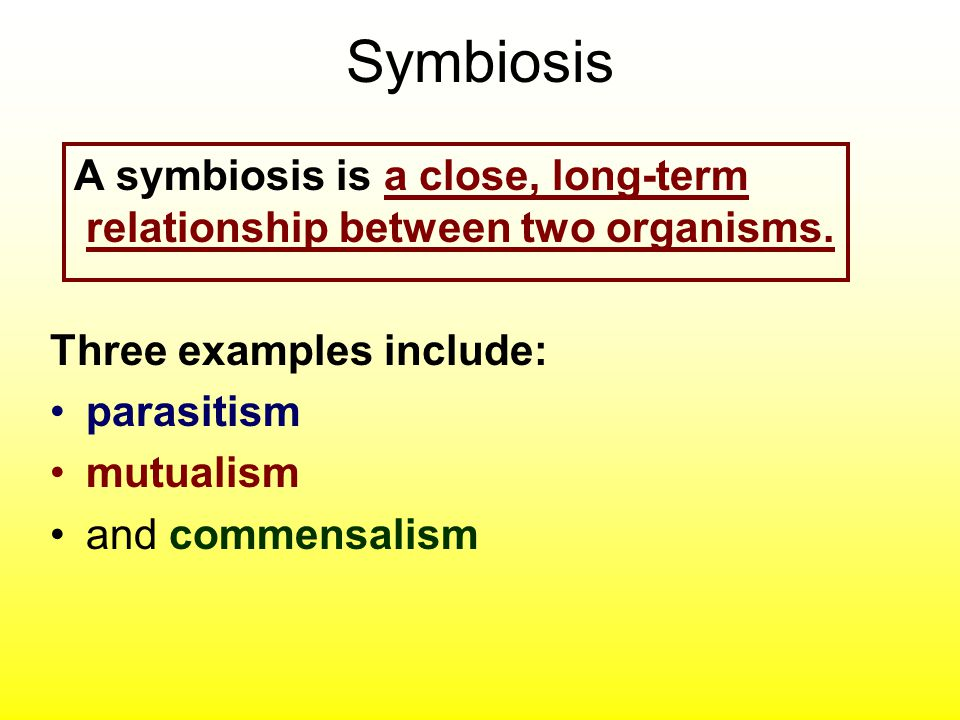 Symbiosis A symbiosis is a close, long-term relationship between two organisms. Three examples include: