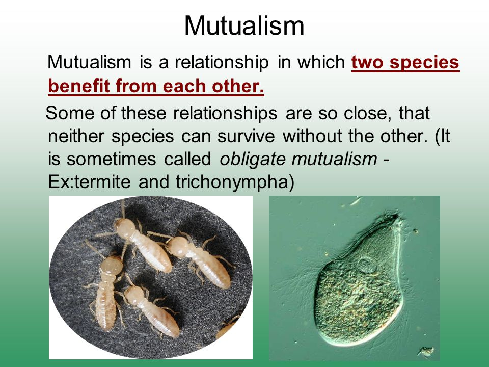 Mutualism Mutualism is a relationship in which two species benefit from each other.