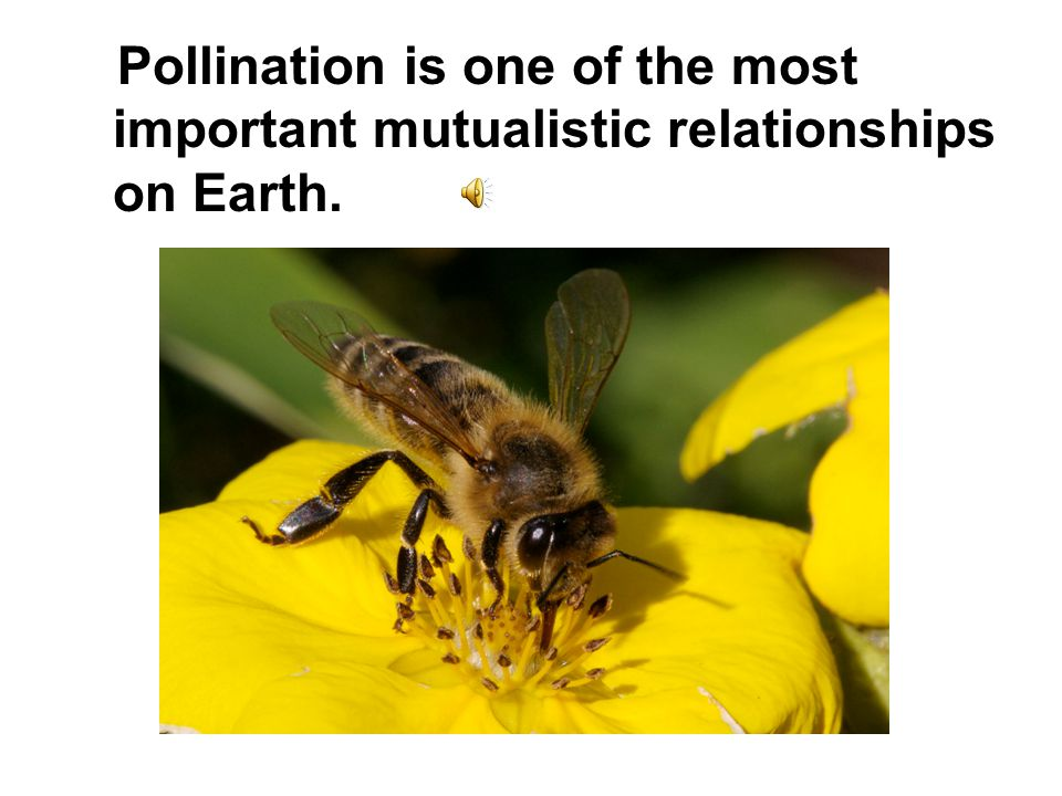 Pollination is one of the most important mutualistic relationships on Earth.