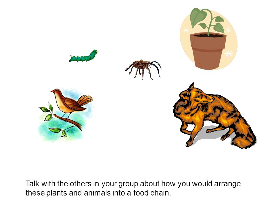 Suggestions: Have this slide in editable view so that students can arrange the animals with either a mouse or on an interactive whiteboard.