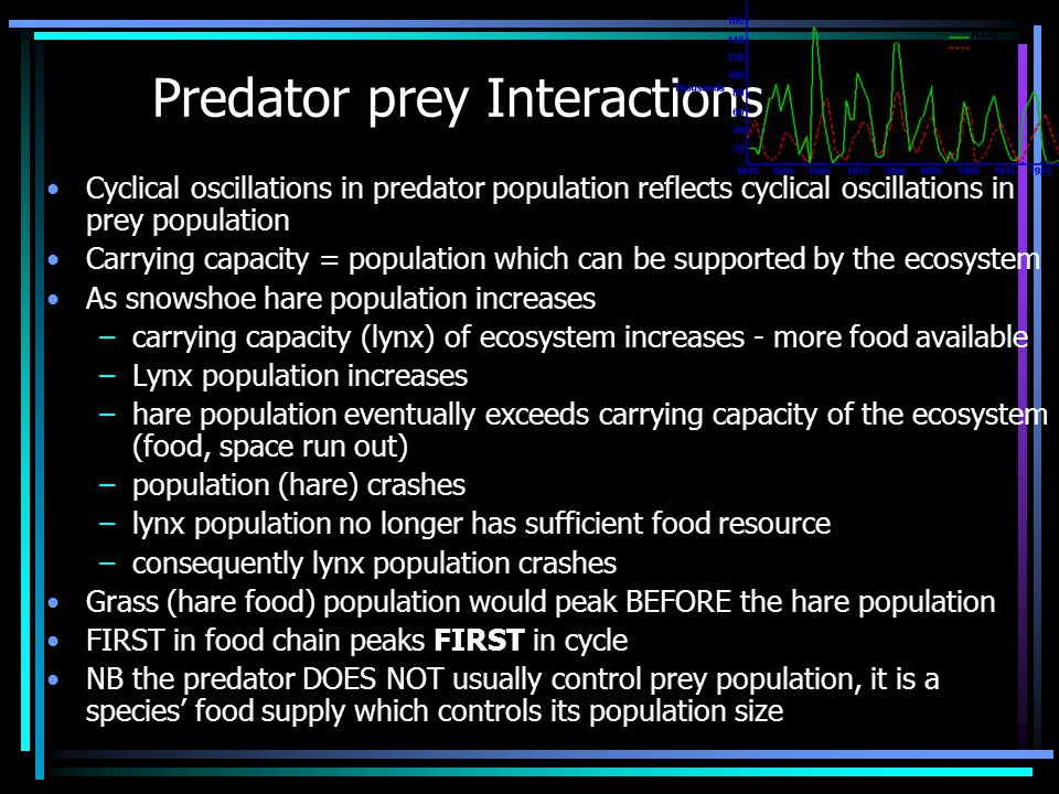 Predator prey Interactions