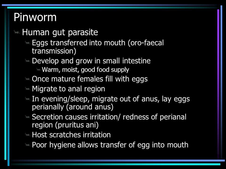 Pinworm Human gut parasite