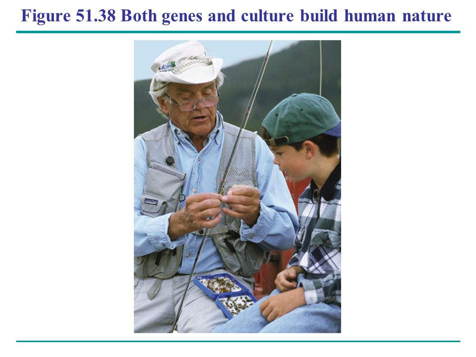 Figure 51.38 Both genes and culture build human nature