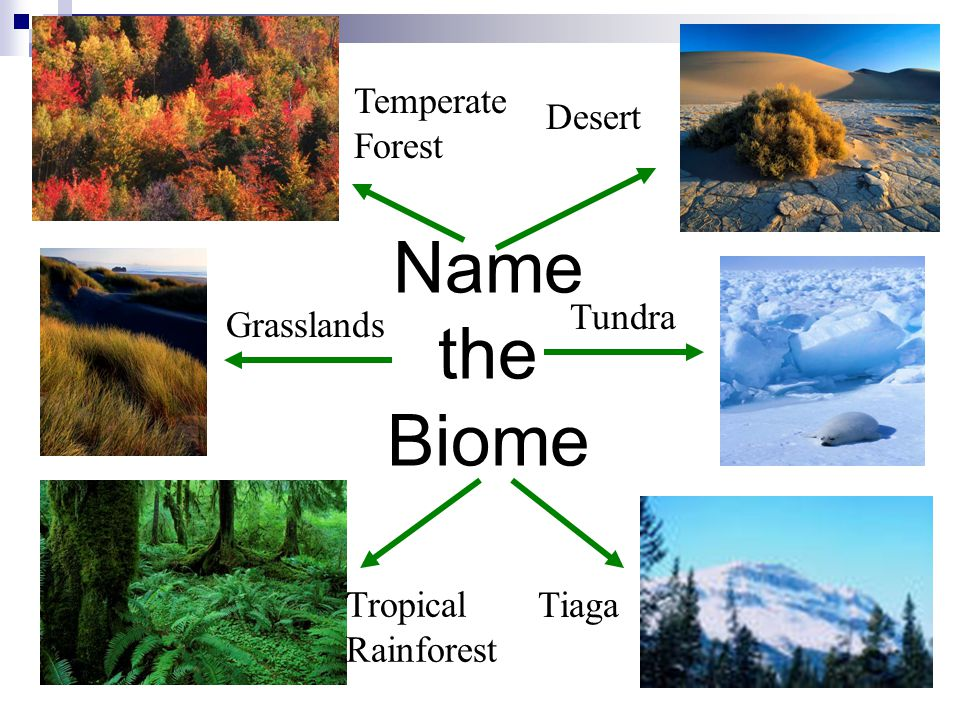 Name the Biome Temperate Forest Desert Tundra Grasslands
