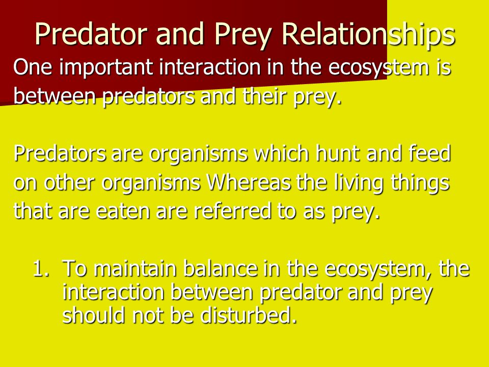 Predator and Prey Relationships