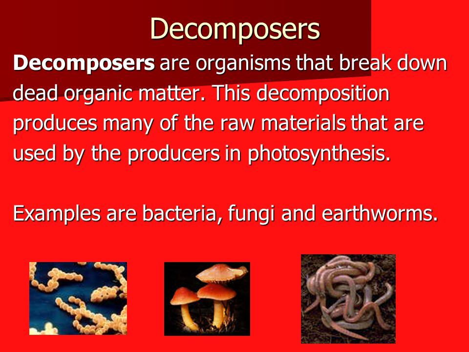 Decomposers Decomposers are organisms that break down
