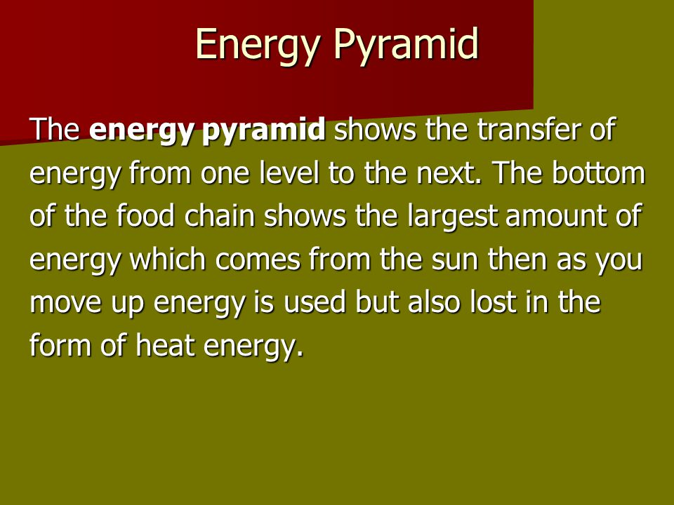 Energy Pyramid The energy pyramid shows the transfer of