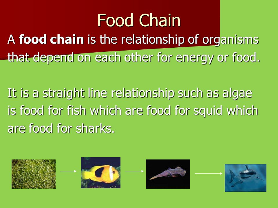 Food Chain A food chain is the relationship of organisms
