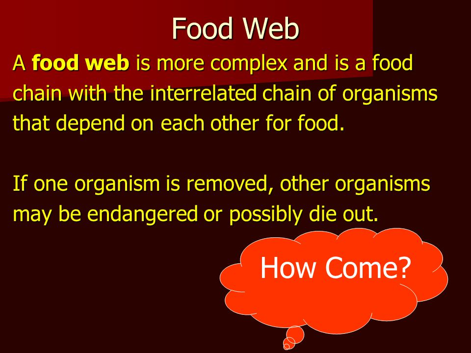 Food Web How Come A food web is more complex and is a food