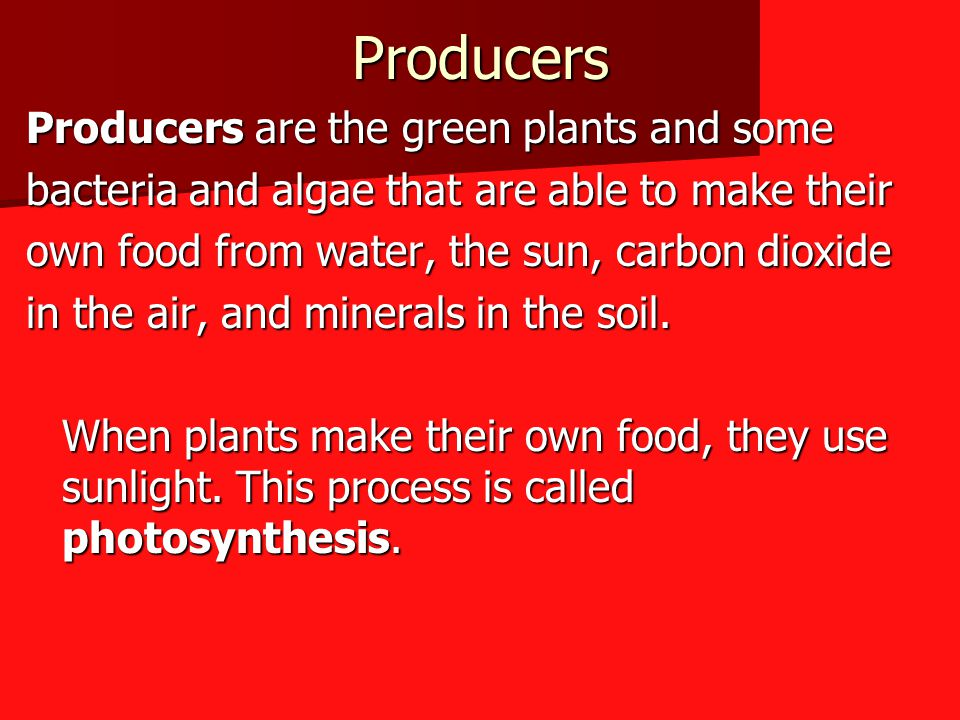 Producers Producers are the green plants and some
