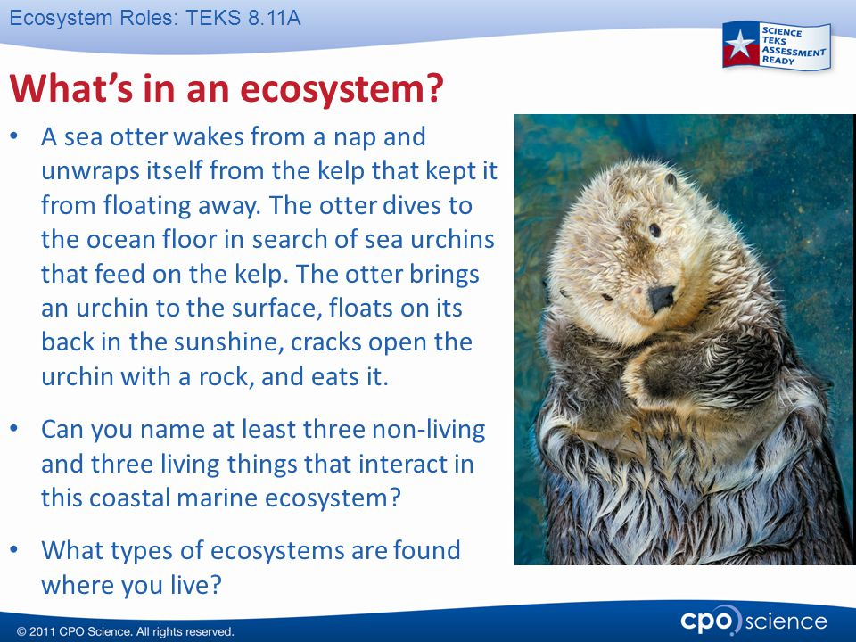 What's in an ecosystem
