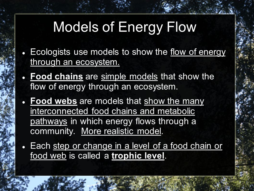 Models of Energy Flow Ecologists use models to show the flow of energy through an ecosystem.