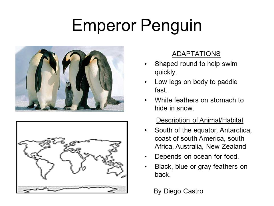 Mrs. McDonald's Class Animal Projects. - ppt download