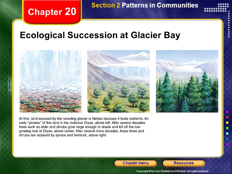 Ecological Succession at Glacier Bay