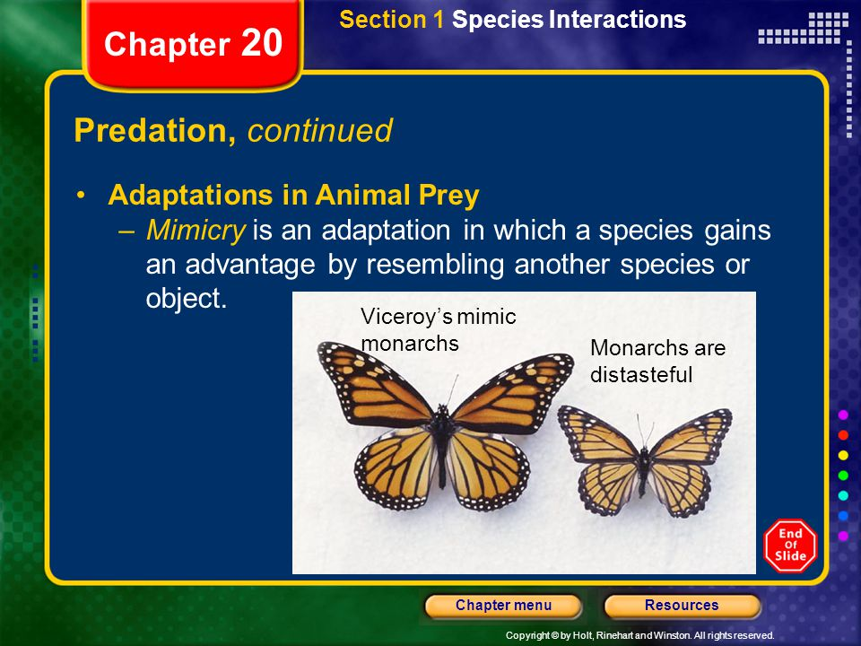 Chapter 20 Predation, continued Viceroy's mimic monarchs Monarchs are