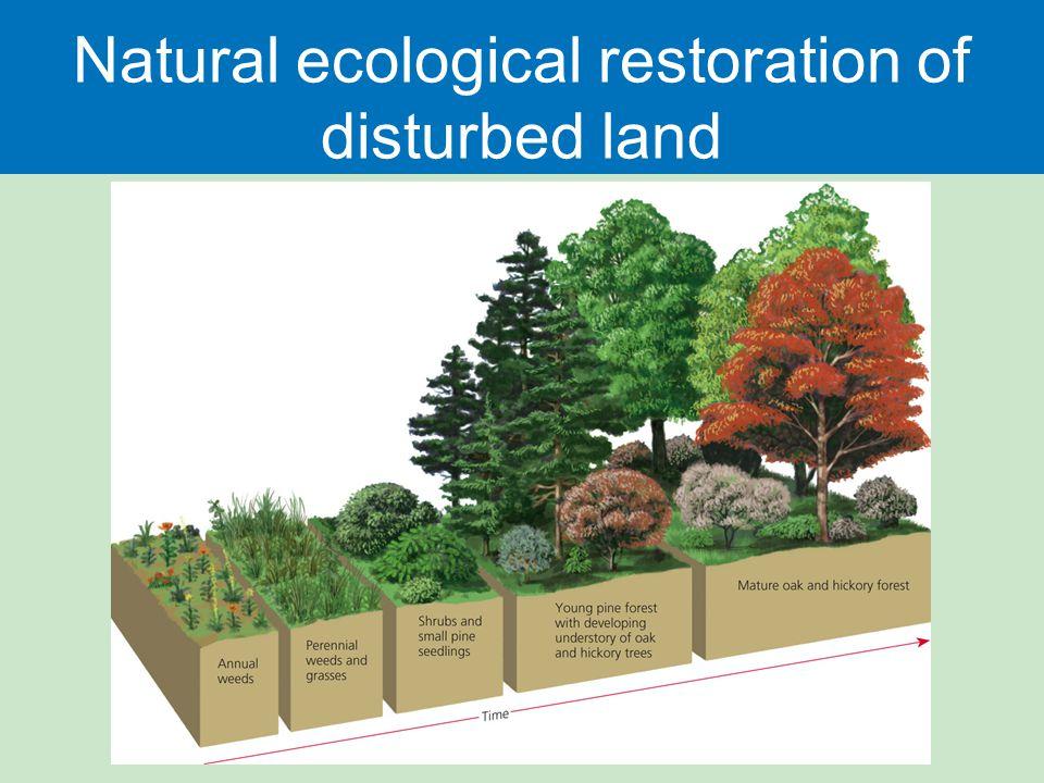 Natural ecological restoration of disturbed land
