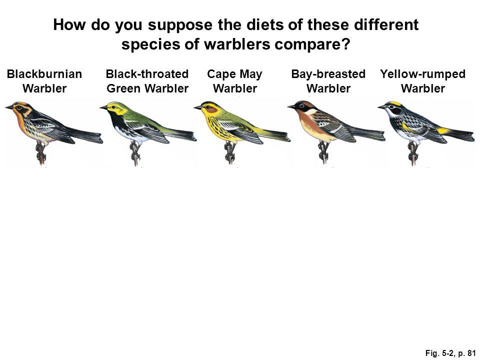 Black-throated Green Warbler Yellow-rumped Warbler