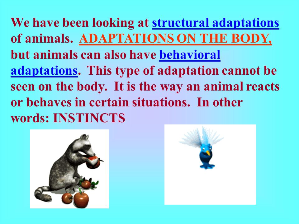 We have been looking at structural adaptations of animals