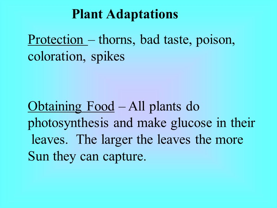Plant Adaptations Protection – thorns, bad taste, poison, coloration, spikes. Obtaining Food – All plants do.