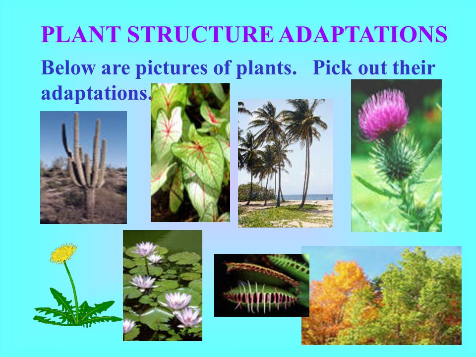 PLANT STRUCTURE ADAPTATIONS