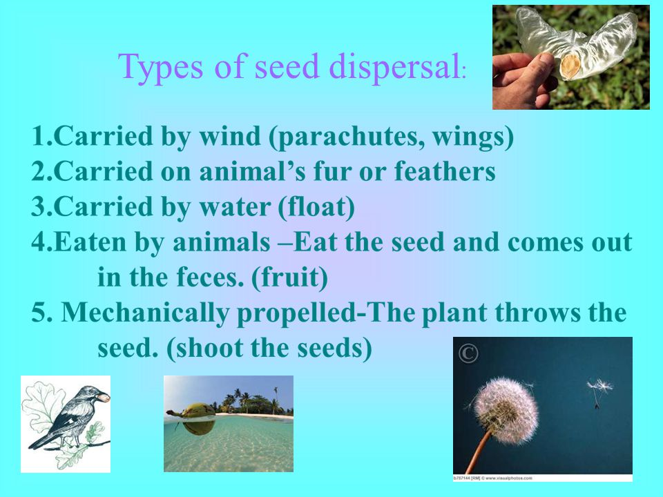 Types of seed dispersal: